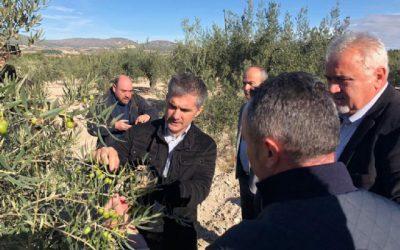 La Comunidad destina 500.000 euros para luchar contra la Xylella Fastidiosa