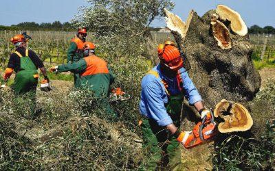 Cooperativas Agro-alimentarias de España reitera la necesidad de reforzar los controles en frontera para evitar la entrada de plagas en Europa