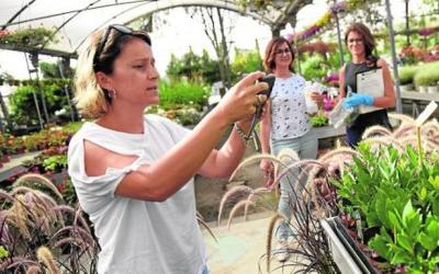 La Xylella Fastidiosa no afecta a la Región de Murcia