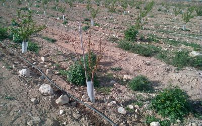 Consulta sobre un árbol seco